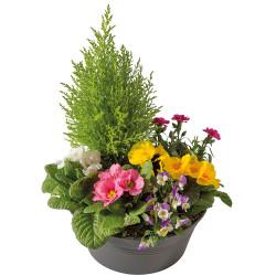 FUNÉRAL PLANT CUTTINGS SINCÈRE AFFECTION